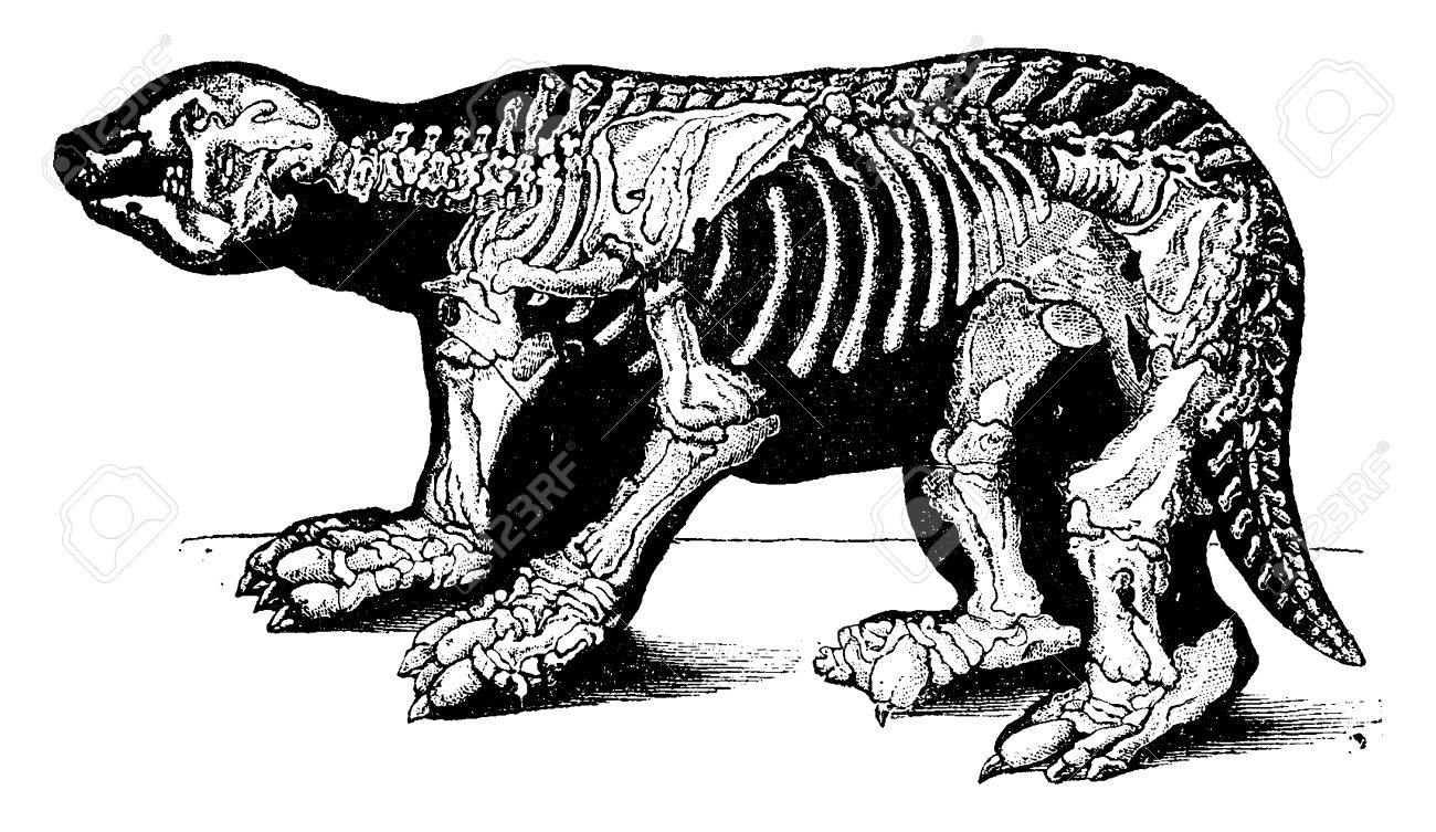 41789305 skeleton of megatherium vintage engraved illustration natural history of animals 1880